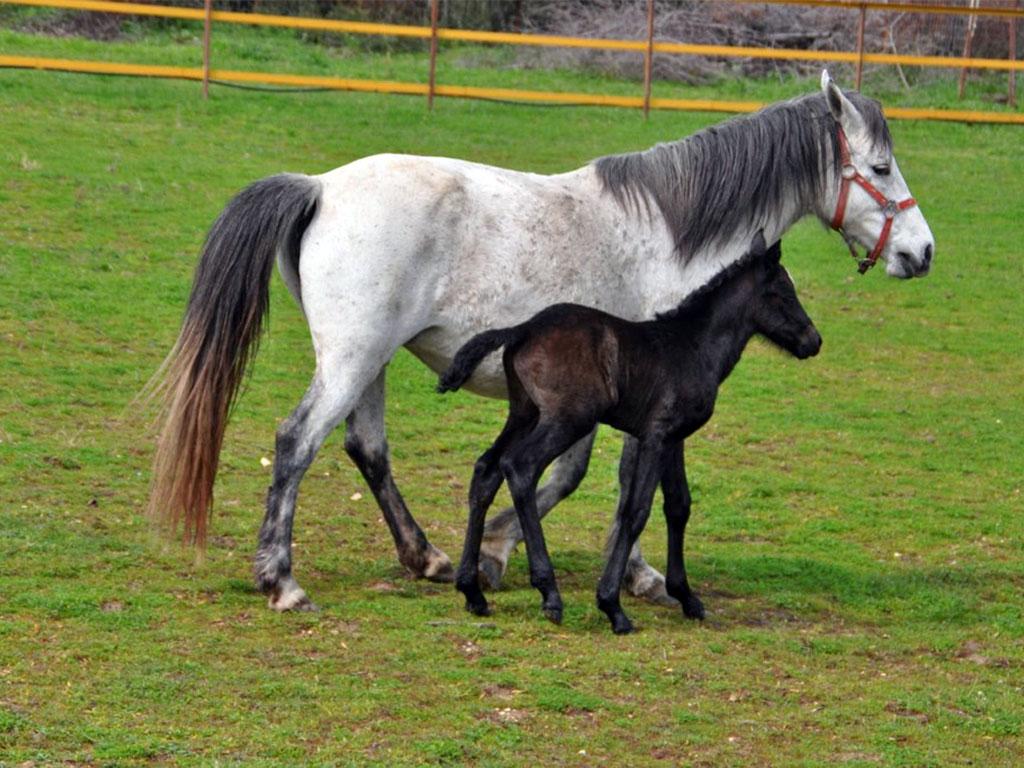 Horse Riding Asprovalta Nea Vrasna